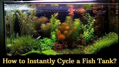 How to Instantly Cycle a Fish Tank