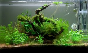 Silent Fish Tank Cycling Using Plants