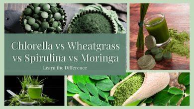 Chlorella vs Wheatgrass vs Spirulina vs Moringa