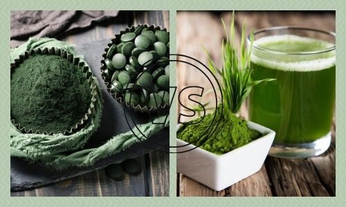 Chlorella vs Wheatgrass