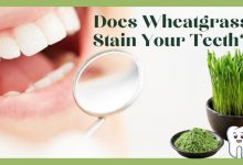 Does Wheatgrass Stain Your Teeth